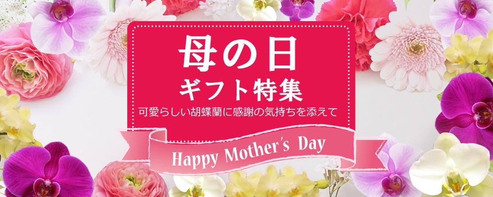 母の日に贈る胡蝶蘭