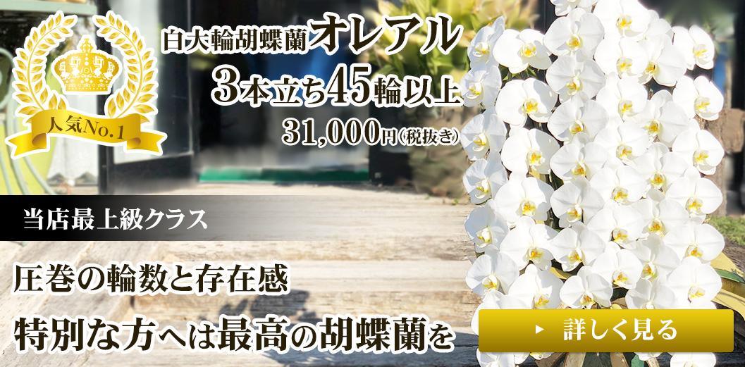お祝いに最適な白大輪胡蝶蘭3本立ち45輪以上オレアル