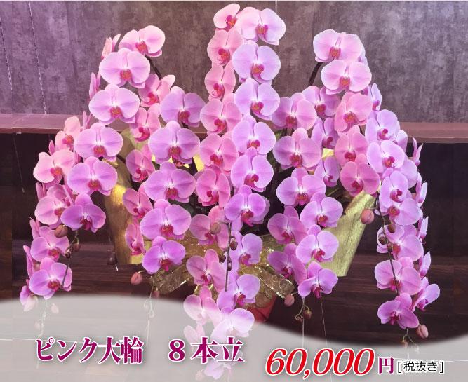 8本ピンクオーダー胡蝶蘭></div>     <br> こちらの商品は配達地域を限定させていただいております。 <br>お電話でお問合せください。  <br> 7本立胡蝶蘭¥50,000~(お花の輪数によってお値段が異なります。) <br> 10本立胡蝶蘭¥100,000~(お花の輪数によってお値段が異なります。) <br> その他の本数もお電話でご相談ください。 <br> <font color=