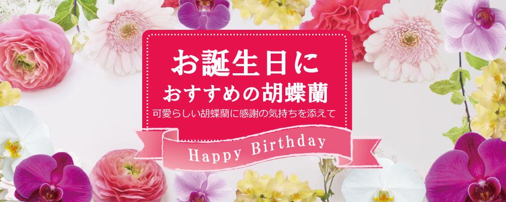 誕生日に贈る胡蝶蘭