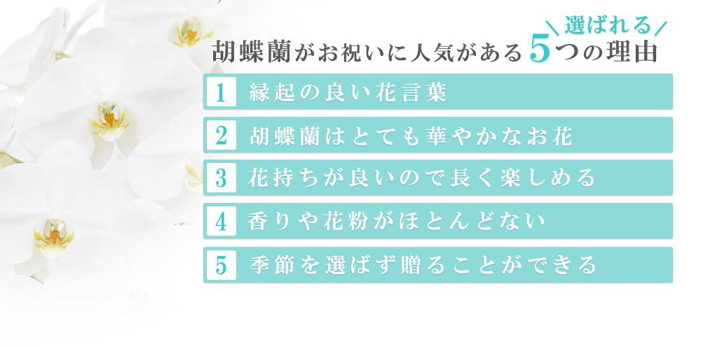 胡蝶蘭が人気の5つの理由