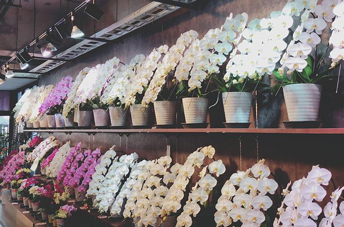 胡蝶蘭は花持ちが良いので長く楽しめる