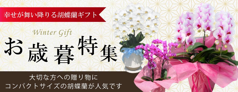 お歳暮に贈る胡蝶蘭