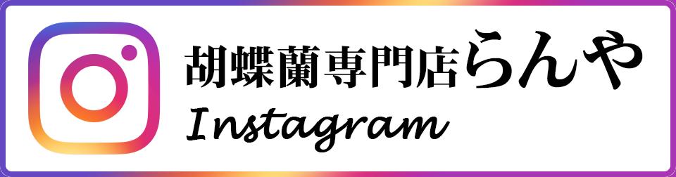 胡蝶蘭専門店らんや Instagram