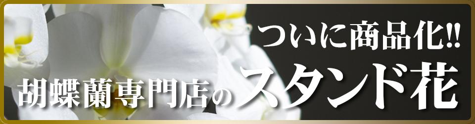 胡蝶蘭専門店のスタンド花