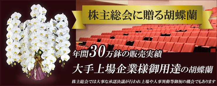 株主総会に贈る胡蝶蘭