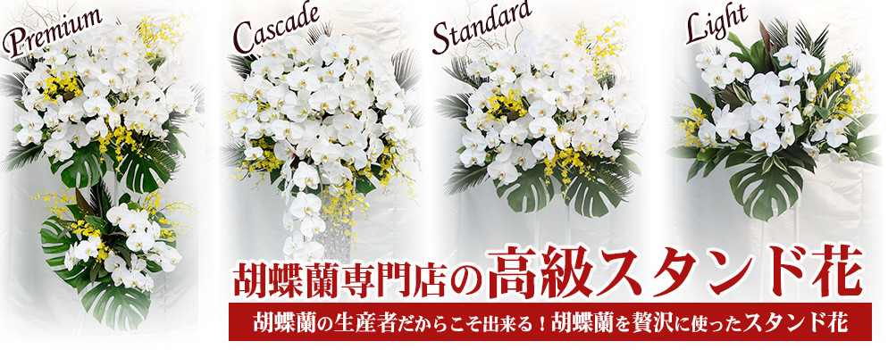 胡蝶蘭スタンド花
