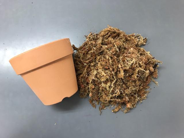 水苔の植替え方法4