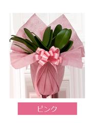 ラッピング ピンク